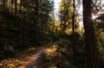 forest.autumn.23