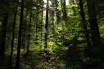 forest.summer.53
