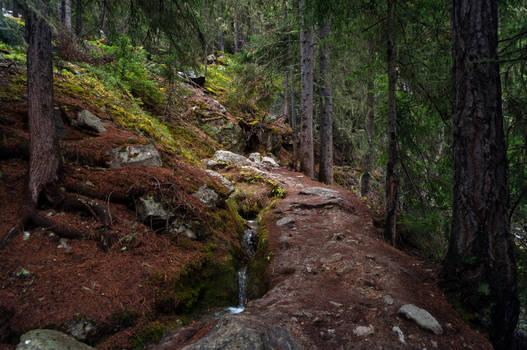 forest.autumn.30