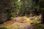 autumn.forest.42