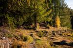 forest.autumn.51