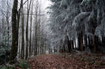 forest.winter.4