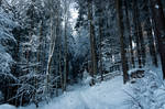 forest.winter.22