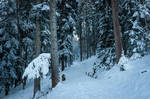 forest.winter.27