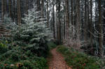 forest.winter.35
