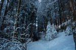 forest.winter.55