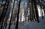 forest.winter.56