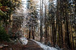 forest.winter.74