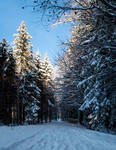 forest.winter.75