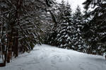 forest.winter.110 by nalina24