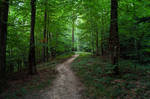 forest.rain.44 by nalina24