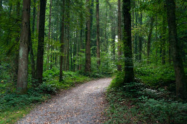 forest.rain.45 by nalina24
