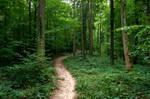 forest.rain.47 by nalina24