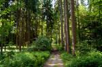forest.summer.60