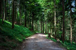 forest.summer.66