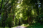 forest.summer.67