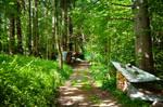 forest.summer.68