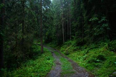 forest.rain.84