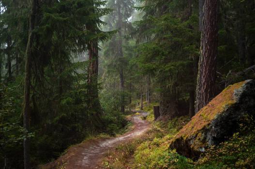 forest.autumn.59