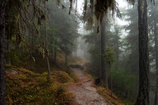 forest.autumn.60
