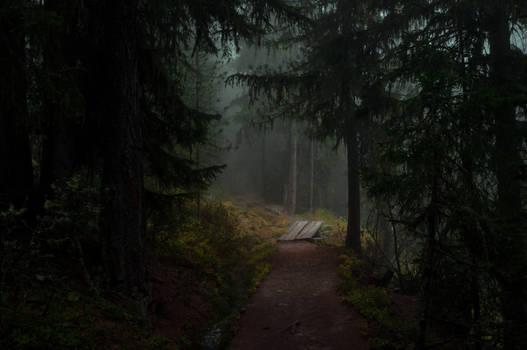 forest.autumn.61