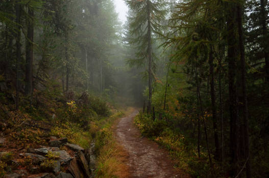 forest.autumn.64