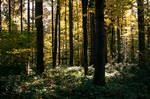forest.autumn.77