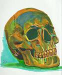 Skull by X-Enlee-X