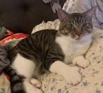 Floppy the Cat by Enlee-Jones