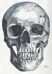 Skull 6 by Enlee-Jones