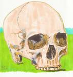 Skull 7 by Enlee-Jones