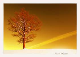 Sown Grain by Erni009