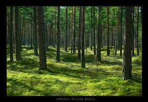 Spring Wood Bulli by Erni009