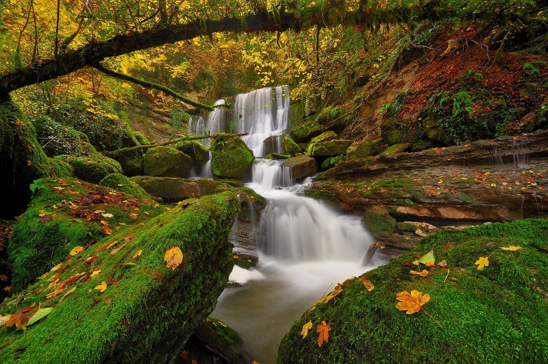 Secret forest by emmanueldautriche