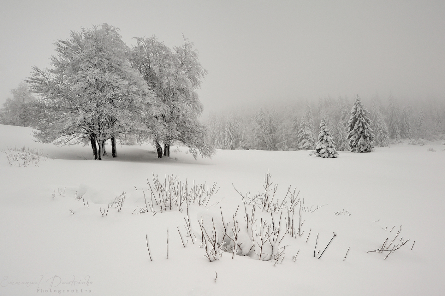 Winter day by emmanueldautriche