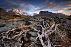 Reign of nature by emmanueldautriche