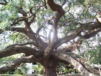 Treaty Oak by Bodhijesse