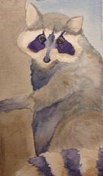 Racoon From Four Seaons