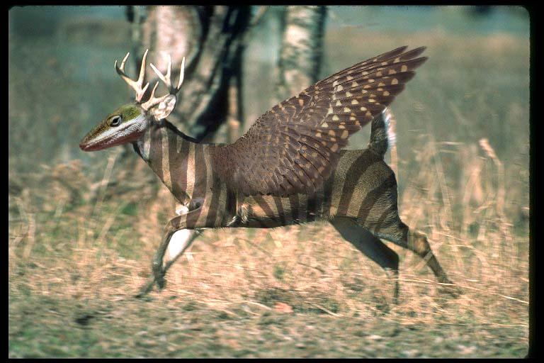 Deer.Zebra.Bird.Lizard...Thing by S-e-K-h-M-e-T on DeviantArt
