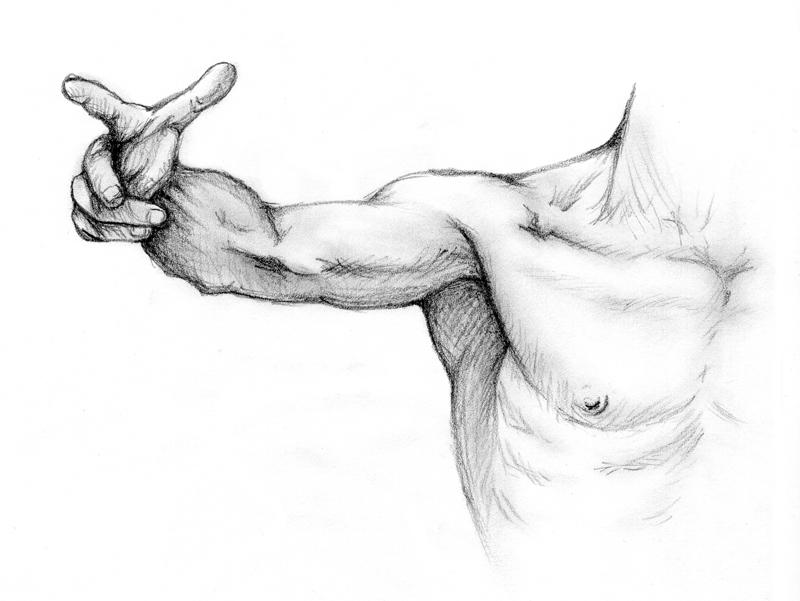 Anatomy 1 by xXSiegXx