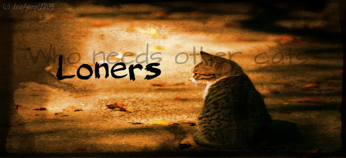 Loners Banner by Uniquemusic1803