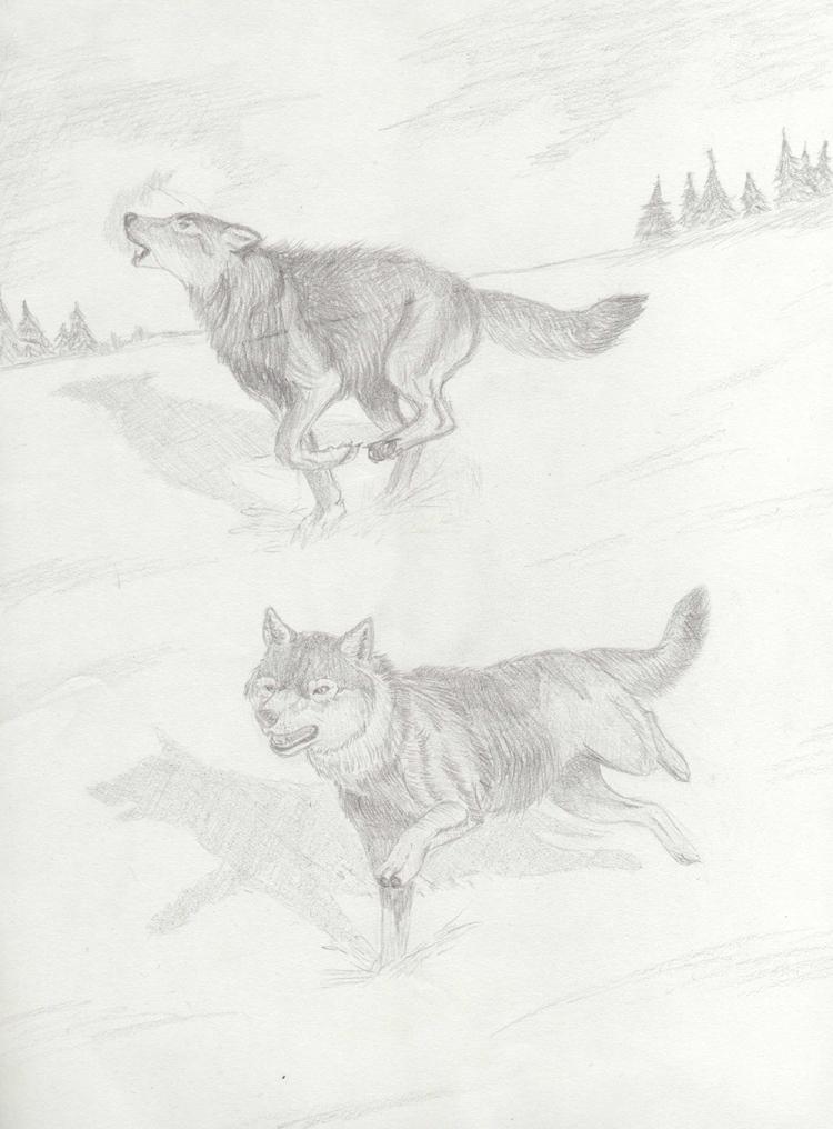 Valm neira la citt sotterranea dei drow e dei vampiri for Disegni di lupi facili