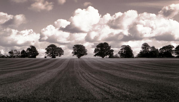 Trees and Clouds by danhortonszar
