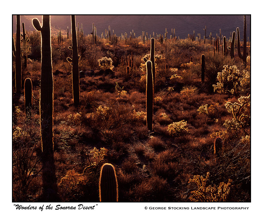 Wonders of the Sonoran Desert by gwrhino