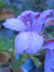 Violet by Psychemax