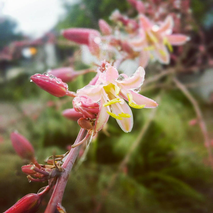 Pink Petals by meesa13