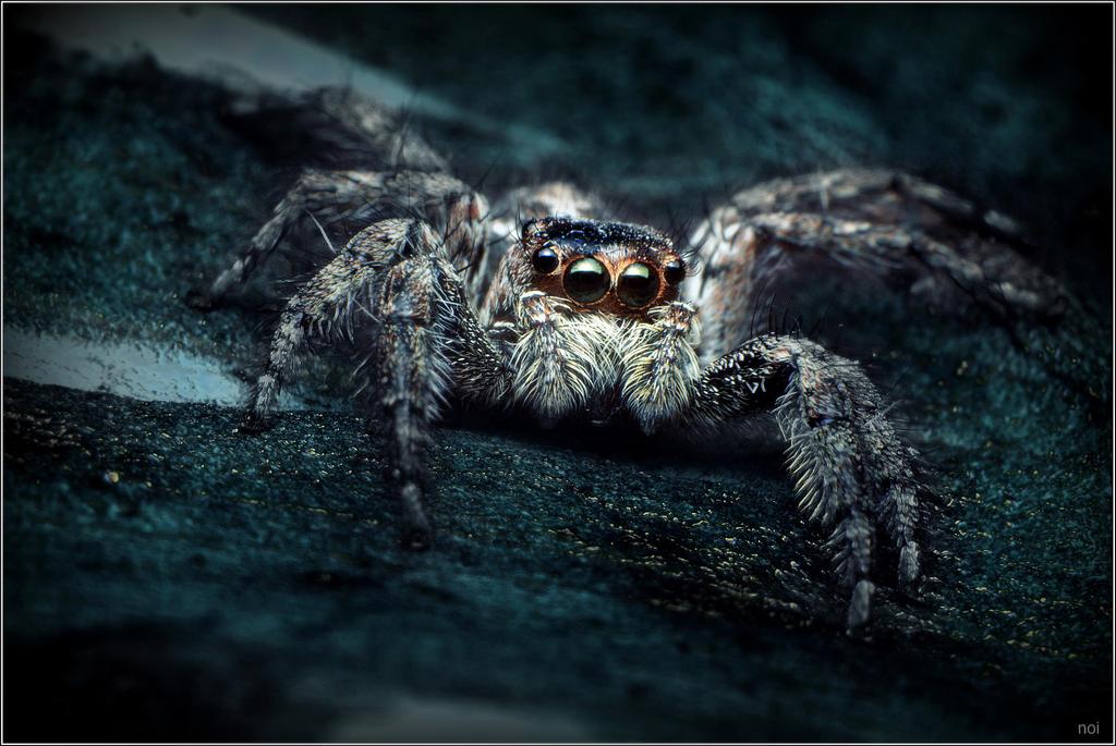 Spider in the dark corner by OshimaruKung7285
