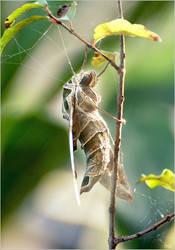 Moth! Wings of dreams are still breathing.