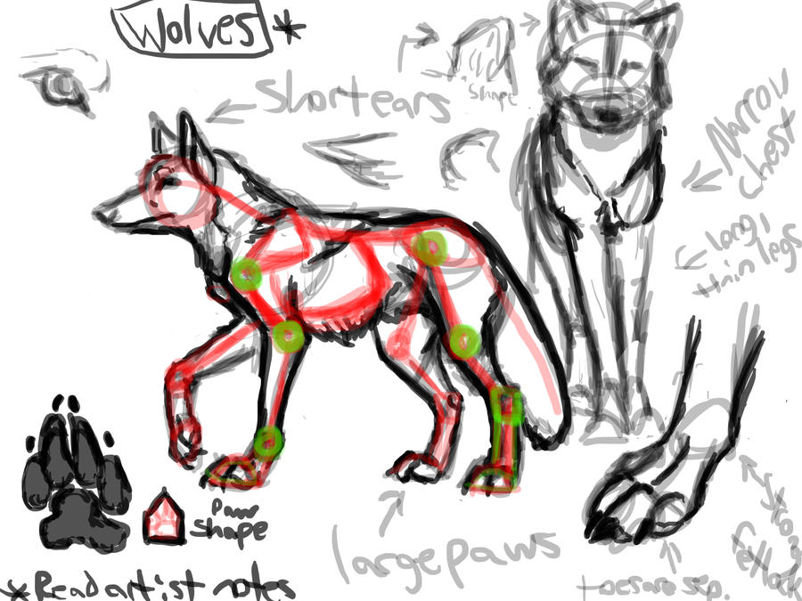 Wolf Structure Notes by Falcolf