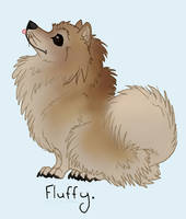 Fluffy Pomeranian by Falcolf